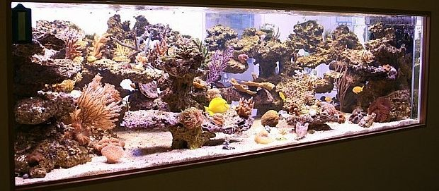 reef_scene_2