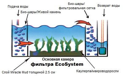 ecosystem_scheme