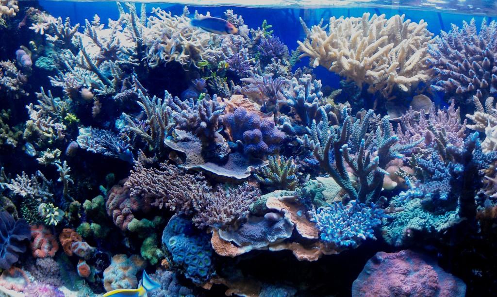 fragment_reef