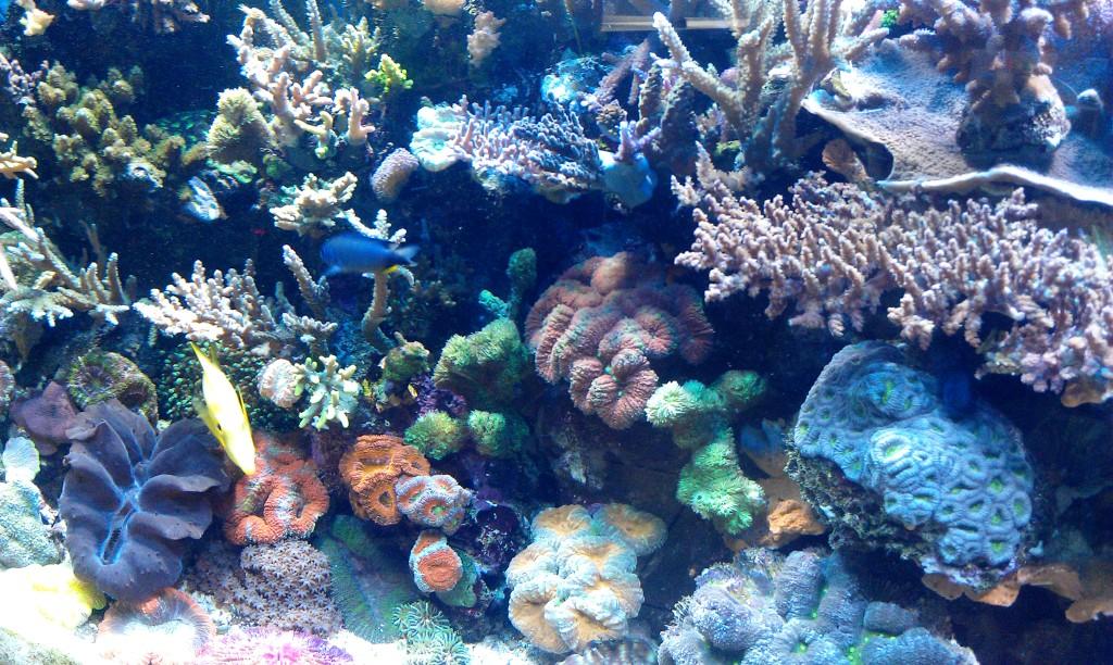 reef_tank2