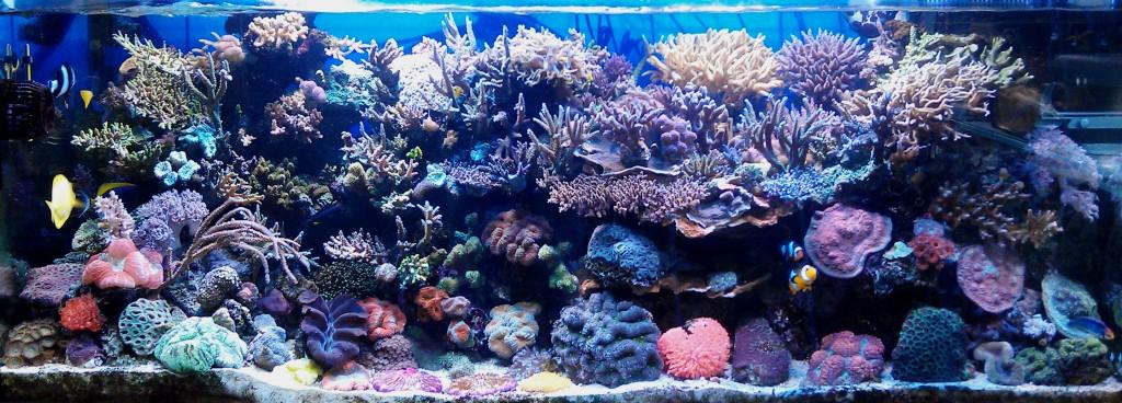 coral_tank_view