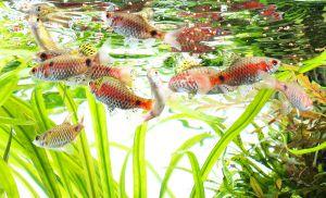 ADA Fish Food AP-3 Premium 35g / Корм для рыб Премиум-класса AP-3, 35 гр.