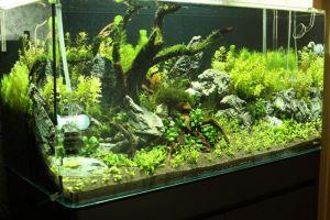 Do!aqua Cube Glass R-type 45x24x16